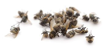 Many dead flies. On white background royalty free stock photos