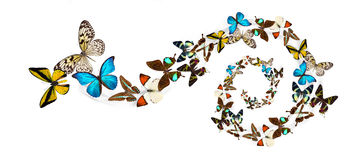 Many different beautiful butterflies Stock Images
