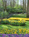 Many different bright and colorful flowerbeds in the park Stock Image