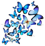 Many different butterflies Royalty Free Stock Photo