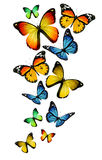 Many different butterflies on background. Many different butterflies white background Royalty Free Stock Images