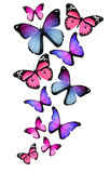 Many different butterflies on white background Stock Images
