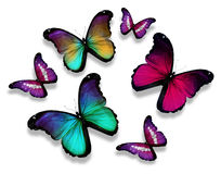 Many different butterflies,  on white background Stock Photo
