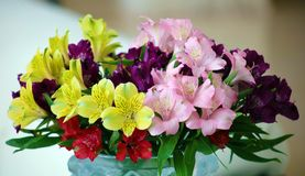 Many different color flowers in jar, yellow, pink, purple, red and green flower. In water Stock Image