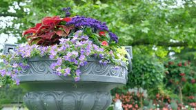 Many different colors in a large outdoor pots Stock Photos