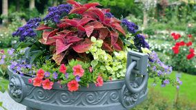 Many different colors in a large outdoor pots Stock Photo