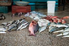 Many different fish big and small on the floor of the fish market stock image