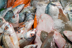Many different fishes at a market Royalty Free Stock Image