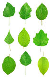 Many different green leaves Stock Photo
