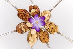 Different nuts on spoons with a flower Stock Photography