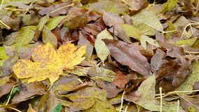 Many different leaves lie on ground, close-up stock footage
