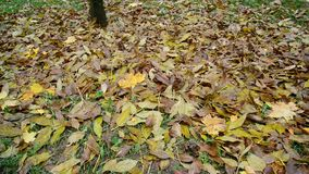 Many different leaves lie on ground under a tree stock video
