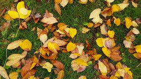 Many different leaves lie on ground under a tree stock video footage
