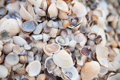 A lot of seashells royalty free stock images