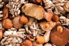 Many different mushrooms. As background stock photos