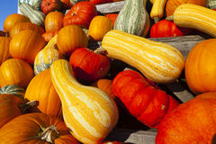Many different ornamental gourds Royalty Free Stock Images