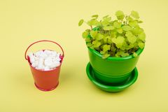 Many different pills in a pink bucket and green flower on yellow. Background Stock Photos