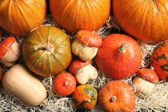 Many different pumpkins as background, closeup Royalty Free Stock Photos