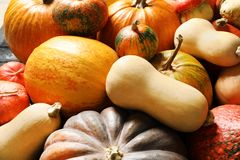 Many different pumpkins as background, closeup. Autumn holidays royalty free stock photos