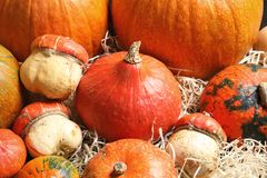 Many different pumpkins as background, closeup. Autumn holidays stock images