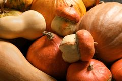 Many different pumpkins as background, closeup. Autumn holidays stock photography