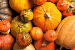 Many different pumpkins as background, closeup. royalty free stock photos