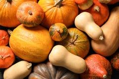 Many different pumpkins as background, closeup. Autumn holidays stock photos