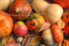 Many different pumpkins as background, closeup. Autumn holidays royalty free stock images