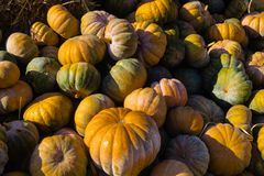 Stack of pumpkins royalty free stock photos