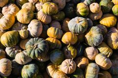 Stack of pumpkins royalty free stock images