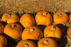 Stack of pumpkins stock images