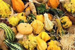 Many different pumpkins in the fruit market as background, close-up. Autumn vacation royalty free stock image