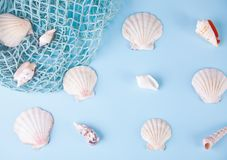 Many different seashells and fishing net as texture and background for designers. Top View. Copy space. Many different seashells and fishing net on the blue stock photography