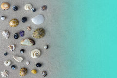 Many different seashells of Tasman sea on grey sand background or texture. Many different seashells of Tasman sea on sand background or texture, sea and beach Royalty Free Stock Photos