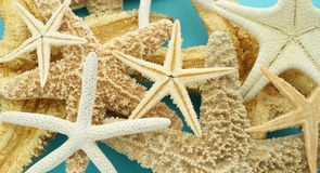 Starfish. Many different starfish on a blue background Royalty Free Stock Photos