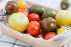 Many different tomato breeds Stock Photography