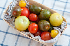 Many different tomato breeds Stock Image