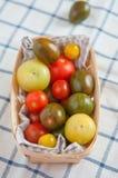 Many different tomato breeds Stock Photos