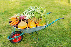 Many different vegetables lie in the garden cart Stock Photo