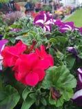 Flower settings Royalty Free Stock Photos