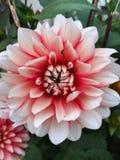 Flower settings Stock Images