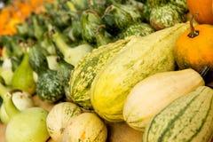 Many diverse pumpkins Royalty Free Stock Image