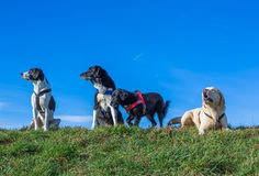 Many dogs Stock Photo