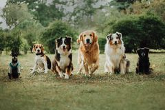 many dogs run on grass. green parck background stock images