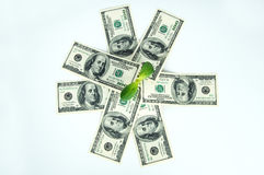 Many dollars and a green sprout isolated Royalty Free Stock Images