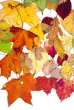 Many dried autumn leaves Royalty Free Stock Photos