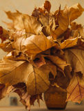 Many dried autumn yellow leaf in a glass vase Stock Photos