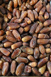 Many dried dates. Many appetizing dried dates, pattern Royalty Free Stock Photos