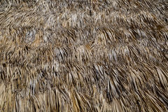 Many dried palm leaves Royalty Free Stock Image