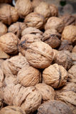 Many dried walnuts Royalty Free Stock Image